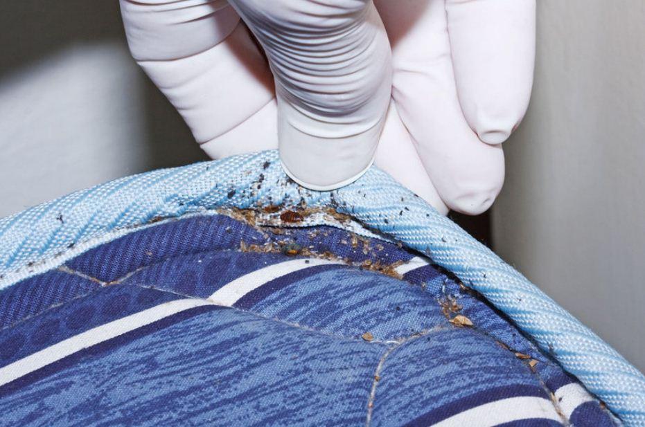 اسباب ظهور حشرة البق في المنزل